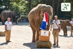 Fußball-EM: Hagenbecks Elefanten-Orakel sagt Sieg für Frankreich voraus