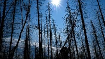 Umwelt: Risikoanalyse sieht wachsende Gefahren durch den Klimawandel