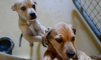 nach der pandemie landen die hunde im tierheim
