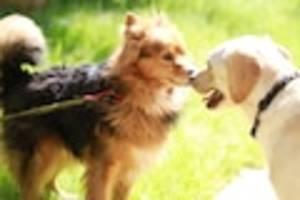 FOCUS-Online-Dogcast - Fremde Hunde beschnuppern? Halter sollten ihre Fellnasen im Zaum halten