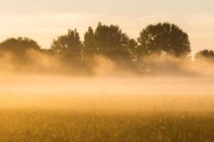 wetter: ministerium appelliert: hitze für tiere vermeiden