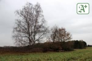 Neue Erkenntnisse: Aldi-Neubau: Hügelgrab in Stelle ist jetzt zerstört