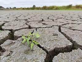 Erste Hitzewelle rollt: Droht Deutschland erneut ein Dürrejahr?