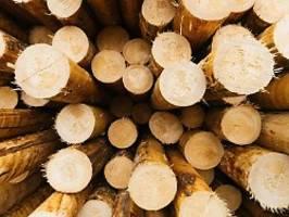 Holzpreise außer Kontrolle: Zimmerer: So eine Situation gabs noch nie