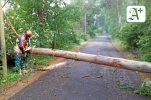 Unwetter: Blitzeinschlag und umgefallene Bäume in Norderstedt
