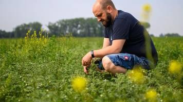 landwirtschaft - super-eiweiß-pflanze: landwirte entdecken kichererbse