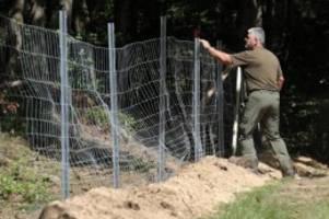 Agrar: Brandenburg plant zweiten Zaun gegen ASP an Grenze