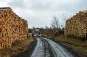 forstwirtschaft: holzmangel am bau - altmaier will mehr fichten fällen lassen