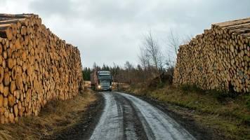 rohstoffmangel: agrarministerium sieht altmaiers holzeinschlagpläne skeptisch