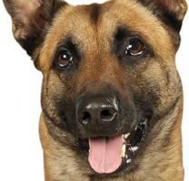 """""""manni"""" hielt ihnen """"den rücken frei"""" - hagener polizisten trauern um diensthund in rührendem brief"""
