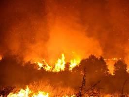 große waldbrände: hitze in bulgarien erreicht gefährliche höhe