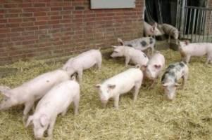 lebensmittel: bgh schützt hohenloher landschwein