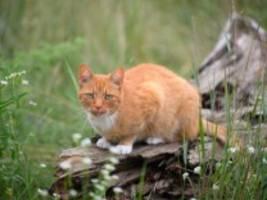 brighton: fünf jahre haft für katzenmörder