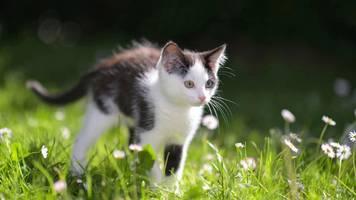 England: Katzenmörder von Brighton muss ins Gefängnis