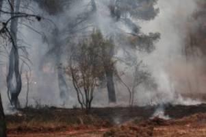 sahara-hitze: hitzewelle in südeuropa: bis zu 50 grad in italien erwartet