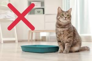 Irgendwann ist Schluss mit Haustier-Betreuung für die Nachbarn