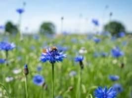naturschutz: natur ist oft nur gut für schöne bilder