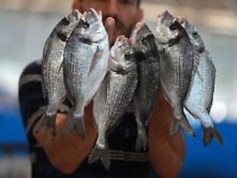 nahrhaftes aus dem meer: blaue lebensmittel könnten fleisch ersetzen