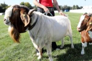 Agrar: Tiere und Technik: 30. Agrarmesse MeLa wird eröffnet