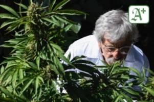 Polizei Hamburg: 60-Jähriger züchtet Cannabis in zehn Büro-Räumen – Festnahme