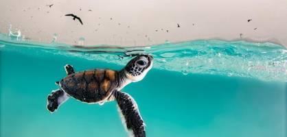 Das sind die 8 atemberaubendsten Ozeanbilder des Jahres