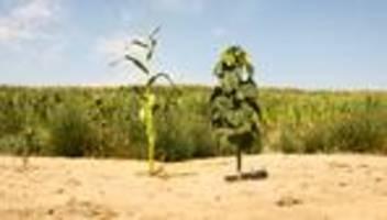agrarpolitik der grünen: lohnt sich nicht