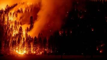 kohlenstoffdioxid: waldbrände auf nordhalbkugel verursachen rekordemissionen