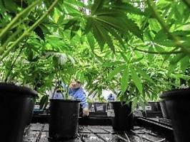 Branche in Goldgräberstimmung: Cannabis-Industrie lauert auf Bundestagswahl
