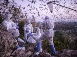 Corona: Warum die Labor-Hypothese als unwahrscheinlich gilt