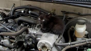 tierisches happy end - polizei rettet katze mit garnelen-trick aus motorraum eines lkw