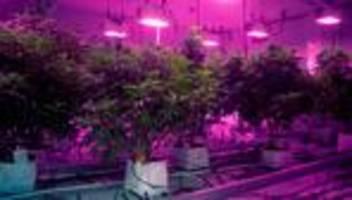 cannabis-markt in deutschland: alles auf gras