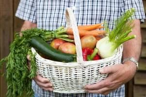 landwirte kritisieren die agrarpolitischen pläne der ampel-parteien
