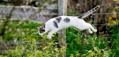 florida: wut über katze im garten – mann soll nachbarn erschossen haben