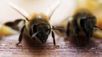 landwirtschaft: australiens bienen-importe wegen corona-pandemie in gefahr