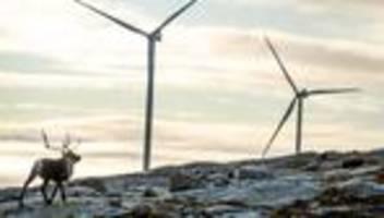 Sami in Norwegen: Auch das noch! Rentier-Hirten gewinnen gegen Windräder